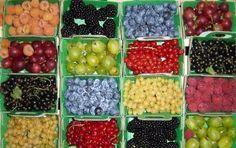 Vitaminen: bessen!     Bron: Brabantse streekproducten zijn hot. http://www.regioinbedrijf.nl/nieuws/brabantse-streekproducten-zijn-hot.2520/