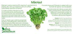 Watercress @DeliciiSanatoas Herbs, Food, Salads, Eten, Herb, Meals, Spice, Diet