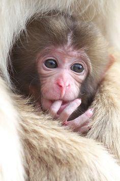 Funny Wildlife, funnywildlife: getawildlife: Baby (by Masashi...