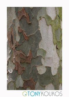 bark, tree, layered, peeling, shapes, travel, photography, art, Tony Koukos, Koukos