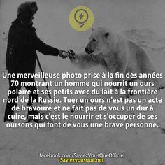 Une merveilleuse photo prise à la fin des années 70 montrant un homme qui nourrit un ours polaire et ses petits avec du lait à la frontière nord de la Russie. Tuer un ours n'est pas un acte de bravoure et ne fait pas de vous un dur à cuire, mais c'est le nourrir et s'occuper de ses oursons qui font de vous une brave personne. | Saviez Vous Que? | Tous les jours, découvrez de nouvelles infos pour briller en société !