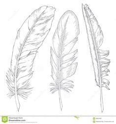 feathers-illustration-28653932.jpg (1300×1390)
