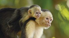 Costa Rica & Panama Wildlife Travel, Wildlife Adventures in Costa Rica & Panama - Lindblad Expeditions