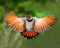 20 awesome examples of bird photography
