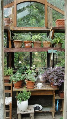In the garden shed..
