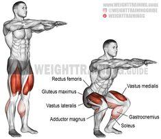 Bodyweight squat. A compound bodyweight exercise. Target muscles: Quadriceps (Rectus Femoris, Vastus Lateralis, Vastus Medialis, and Vastus Intermedius). Synergists: Gluteus Maximus, Adductor Magnus, and Soleus. Dynamic stabilizers: Hamstrings and Gastrocnemius.