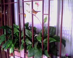 Planta na janela da sala