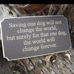 Amazing Rescue Dog