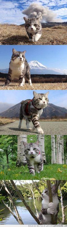 40769 - Está claro que este gato es el amo absoluto. De lo que sea. Pero lo es.