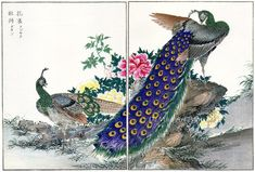 Peacocks & Peonies | Tattoo Ideas & Inspiration - Japanese Art | Numata Kashu, ca.1880s | #Japanese #Art #Peacock #Peony