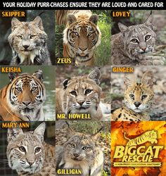 Black Friday thru Cyber Monday Offer:   Free Big Cat Rescue 2018 calendar with order any totaling $45 or more (excluding shipping fees) Offer valid 11/24 – 11/27 http://bigcatrescue.biz  There is no coupon code for this offer. The calendars will be shipped with qualifying orders.