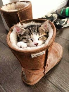 These boots were made for ... sleeping