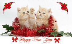 Fluff Wonderland added a new photo. Happy New Year 2014, New Year 2018, Christmas Cats, Christmas And New Year, New Year Wallpaper, Wonderland, Teddy Bear, Animals, Holidays