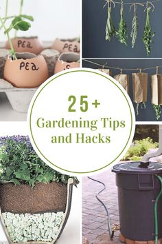 Sharing some great gardening tips to help you grow the perfect garden and herbs this year.