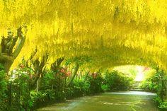 Bodnant Garden, Briton