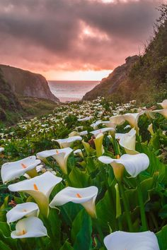 Lily in sunset Photo by Jingjing Li