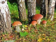 Találtak pár vargányát az erdőben, de ahelyett, hogy megfőzték volna ezt tették velük… - Ketkes.com Growing Mushrooms, Wild Mushrooms, Stuffed Mushrooms, Mushroom Spores, Soil Layers, Compost, Planting Flowers, Pesto, Gardening