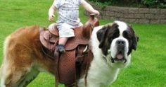 Dogspuppiesforsalecom liked | My first baby before my daughter was born was a Saint Bernard named Lil' Bit O' Lovin'  -   Giddy up Getting a dog or a puppy as a new addition to your family is an excellent decision! You're adding another member that can provide lots of love and enjoyment! This is a relationship you'd want to make sure that you're doing right the first time around. You'll need to find out what makes your dog happy what are the things to look out for and basically how to give…