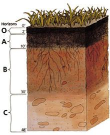 Humus Soil - Wikipedia, the free encyclopedia