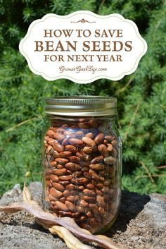Saving seeds from year to year is a good way to spare some money in the gardening budget, become more self-sufficient, and adapt a crop to your unique growing conditions. One of the easiest vegetables to begin with are open-pollinated, heirloom bean seeds Growing Beans, Growing Tomatoes, Growing Vegetables, Vegetables Garden, Herbs Garden, Fruit Garden, Veggies, Organic Gardening, Gardening Tips