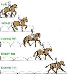 A common mistake made by beginning riders is that the range of the trot is slow to fast, when the scale actually goes small to large.This is why most first and some second level tests we see usually have horses running rather than lengthening. It is not about the speed of the gait but the size of it.