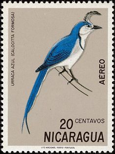 White-throated Magpie-Jay stamps - mainly images - gallery format