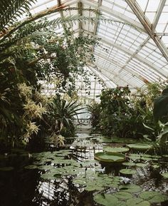 Would it be helpful if we shared how we keep our houseplants alive? The Effective Pictures We Offer You About Greenhouse drawing A quality picture can tell you many things. You can find Dark Green Aesthetic, Plant Aesthetic, Nature Aesthetic, Garden Care, Slytherin Aesthetic, Botanical Gardens, Houseplants, Greenery, Garden Design