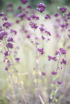 Wildflowers, South Island, New Zealand © Natasha Calhoun via Beautifully, Suddenly.