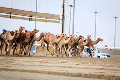 AL MARMOOM HERITAGE #FESTIVAL IN #DUBAI