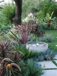 plantes succulentes, herbe de la pampa et bananier