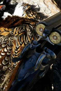 Orvis endorsed wingshooting in Montana, Pheasant Hunting, Bird Hunting, Upland Hunting Pheasant Hunting, Grouse, Wild Birds, Montana, Sage, Safari, Contrast, Flathead Lake Montana, Salvia