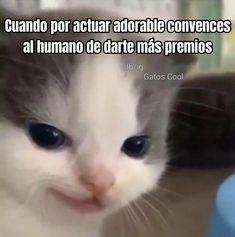 Gatos Cool, Cats, Animals, Door Prizes, Gatos, Animales, Animaux, Animal, Cat