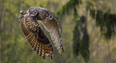 Photograph Flying giant by Björn Reibert on 500px