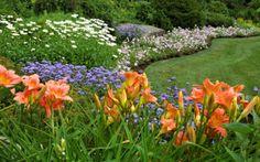 Perennial Flower Garden Guide