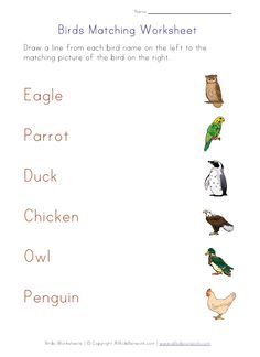 Apologia Zoology 2 Worksheets Further Worksheet On Mixtures And ...