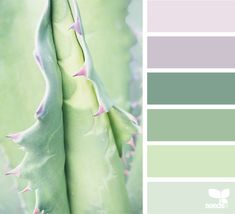 { succulent hues } - https://www.design-seeds.com/in-nature/succulents/succulent-hues-35