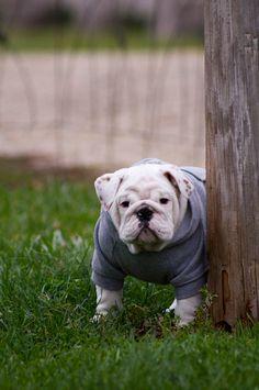 The Baggy Bulldog Collection | BaggyBulldogs