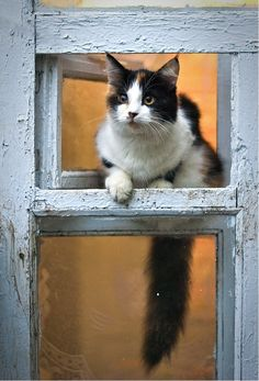 Country Living ~ kitty on the window