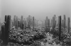 Hiroshi Sugimoto, 'Permian Period,' 1992, Pace Gallery