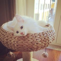 Snowy The Flake Nice Weekend, Cuddle, Laundry Basket, Wicker Baskets, Decor, Dekoration, Decoration, Have A Good Weekend, Home Decoration