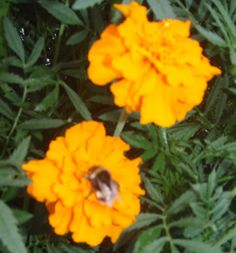 Honey - http://livingfreefrom.org/health/honey-the-fantastic-universal-remedy/