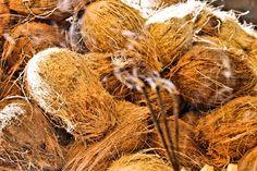 Coconuts at Bandarawela, Sri Lanka