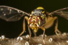 PestCARE là công ty chuyên cung cấp diệt vụ diệt ruồi và diệt côn trùng chuyên nghiệp đến quý khách hàng với các phương pháp hiệu quả, an toàn.