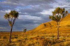 Sunrise near Glenburn Station, Wairarapa | Elyse Childs Photography - Flickr - Photo Sharing!
