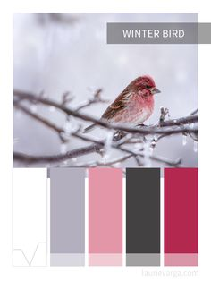 Winter Bird color palette.