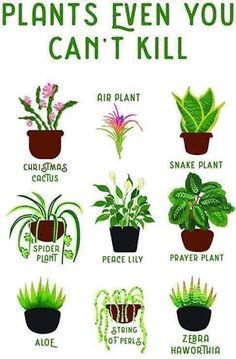Air Plants, Cactus Plants, Garden Plants, Indoor Plants, Indoor Outdoor, Household Plants, Prayer Plant, Pot Jardin, Decoration Plante