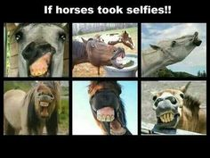 If horses took selfies.funny on horses but ladies you got them buck teeth, crooked teeth, gapped teeth, a lil advice back off the selfies LOL Funny Horse Memes, Funny Horses, Cute Horses, Horse Humor, Pretty Horses, Funny Memes, My Horse, Horse Love, Horse Riding