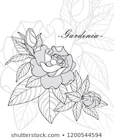 Vector Outline Gardenia Flower Bouquet Bud And Ornate Green Leaves Isolated On White Background Branch With Tropica Gardenia Art Images Art Drawings Sketches