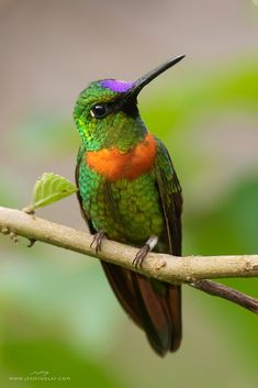 Hope Is The Thing With Feathers, Beautiful Birds, Emily Dickinson, Hummingbirds, Jewels, God, Awesome, Birds, Dios