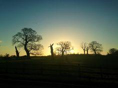 Windsor great park tree silhouette